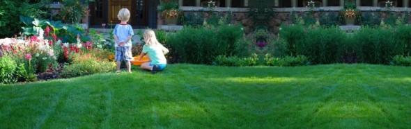 Organic Lawn Care - Clean Air Lawn Care